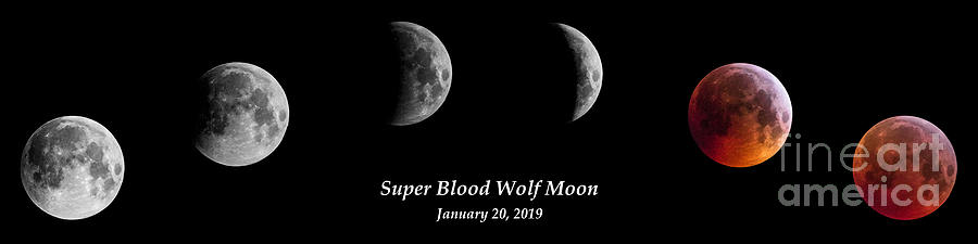 Super Blood Wolf Moon Eclipse by Gary Whitton
