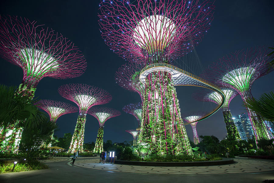 Supertrees In  Gardens By The Bay Photograph by Eternity In An Instant
