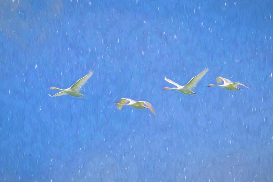 Swans Flying Art by David Pyatt