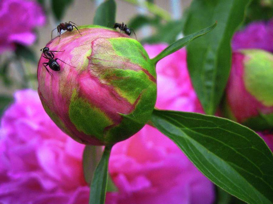 Sweet buds by Tatiana Travelways