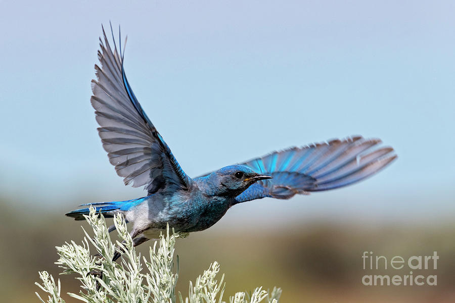 Take to the Air by Mike Dawson