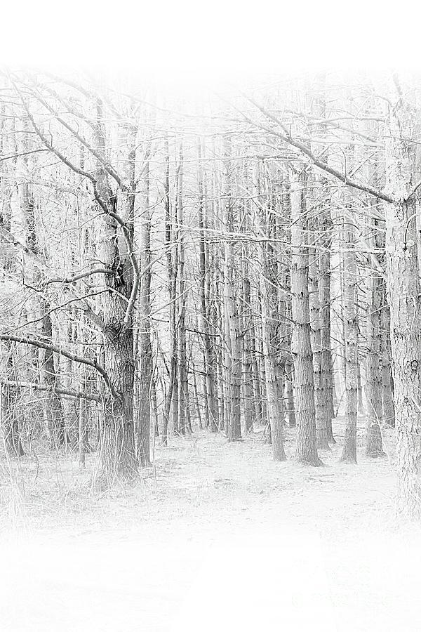 The Beauty of Trees by Marcia Lee Jones