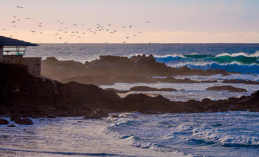 The Birds by Derek Dean