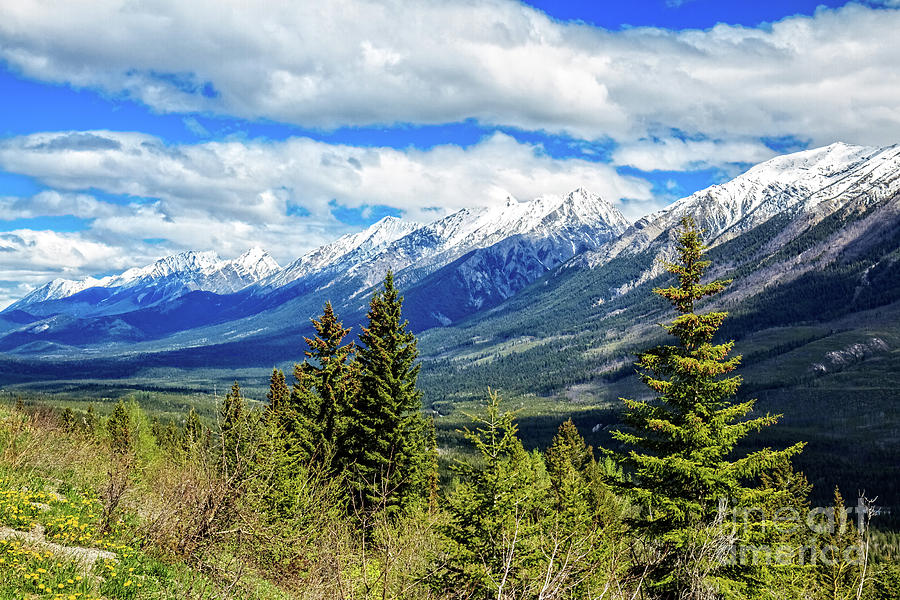 Canada Photograph - The Canadian Rockies  by Robert Bales