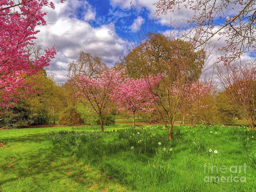 The colours of Spring by Leigh Kemp