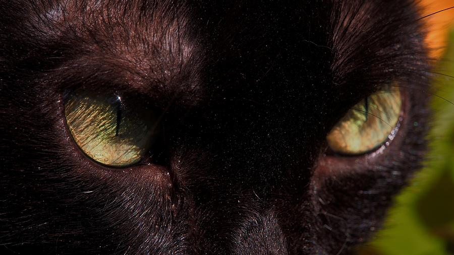 The eyes of a black cat by Eye to Eye Xperience
