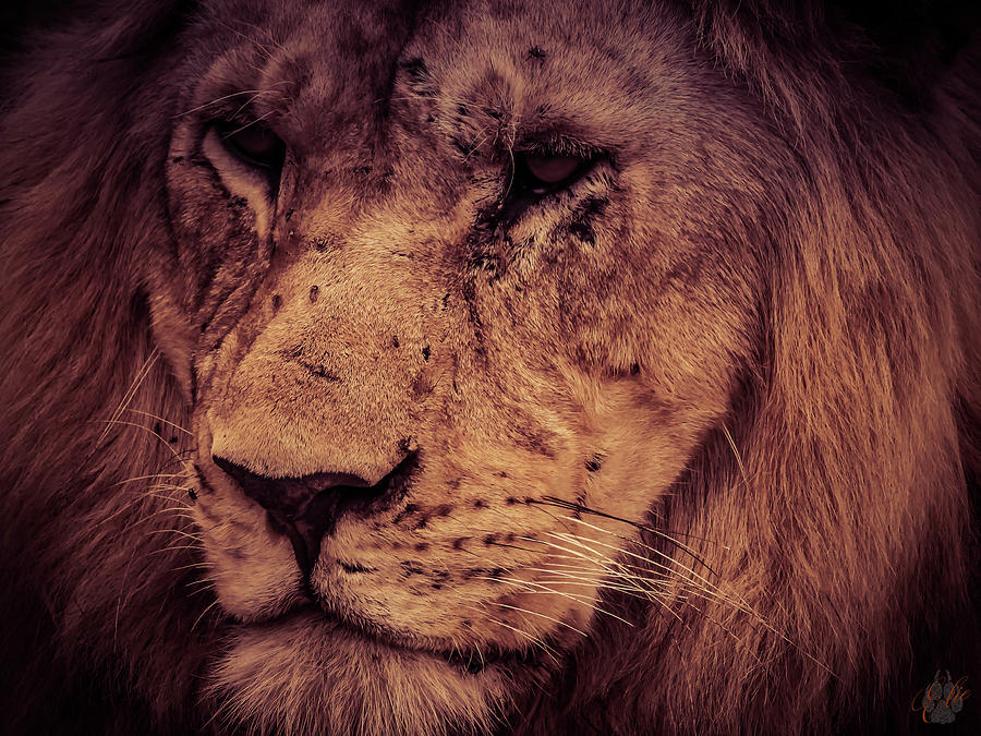 The King by Elie Wolf
