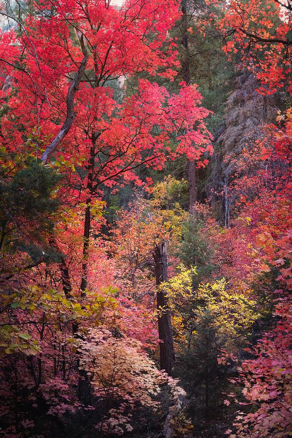 The Many Colors Of Fall  by Saija Lehtonen