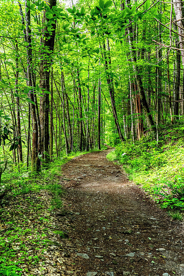 The Path by Larry Waldon