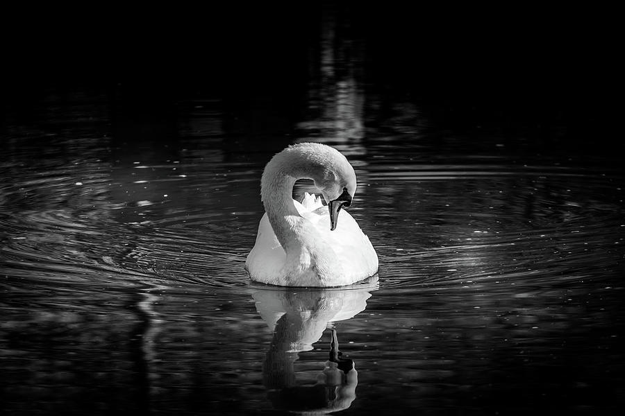 The Swan by Rick Cooper