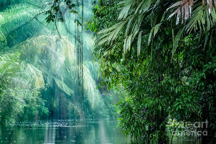 Forest Photograph - Tortuguero National Park, Rainforest by Ronnybas Frimages