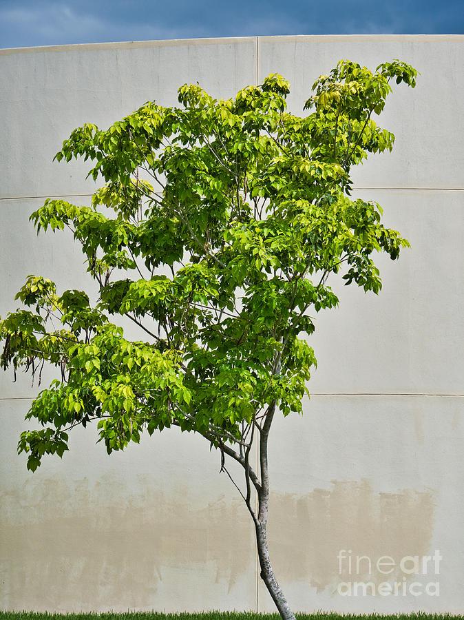Tree Art by Gary Richards