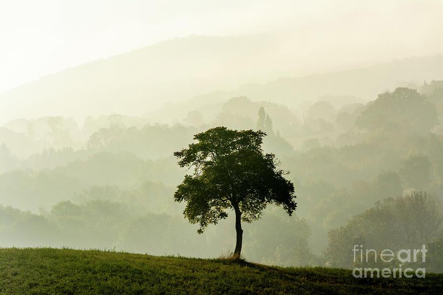 Autumn Photograph - Tree In A Field 1 by Bernard Jaubert