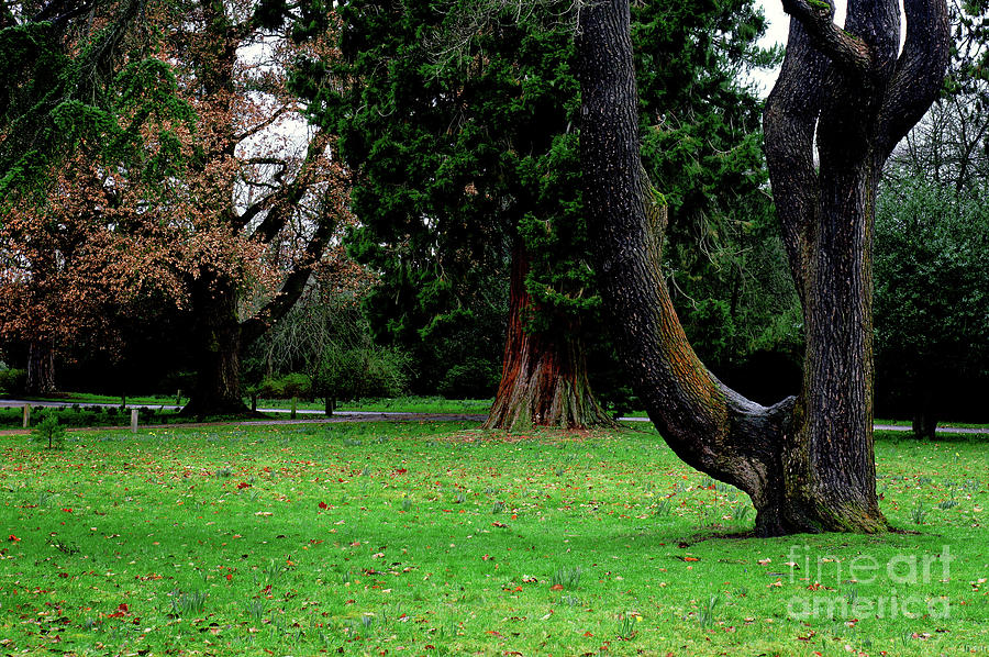 Background Photograph - Trees In A Park by Tom Gowanlock