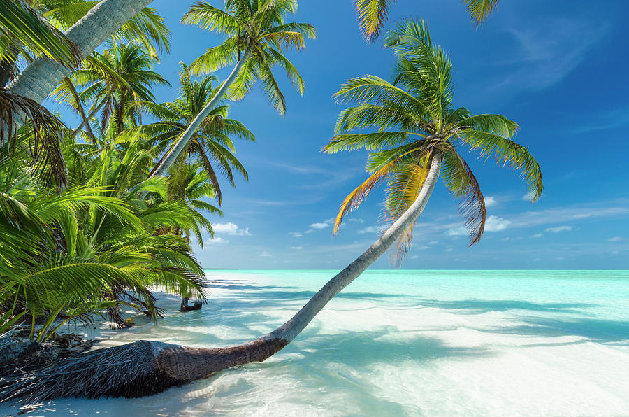 Tropical Beach Of An Atoll Lagoon And Photograph by Pete Atkinson