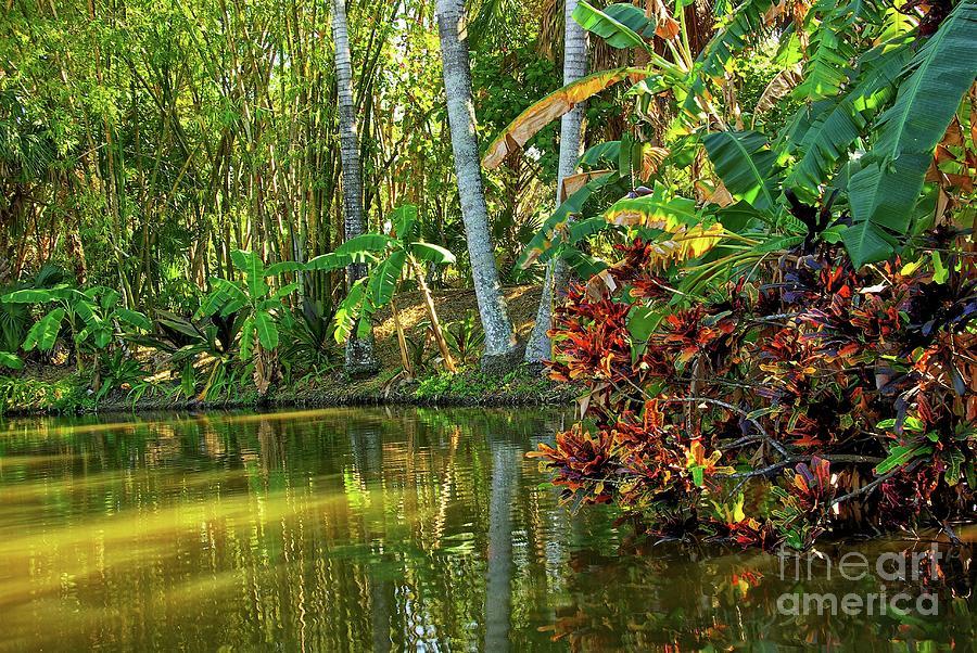 Tropical Photograph - Tropical Corner by Zal Latzkovich