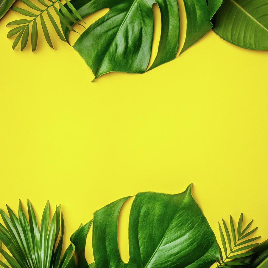 Tropical Leaves And Flowers On Yellow Background Photograph By Natalia Klenova To make sure that we have a garden that you can enjoy year round we are technically the plants we use to create the tropical effect are not true tropicals but give the desired large leaved plants with massive big leaved foliage are ideal in creating the illusion of the tropics. tropical leaves and flowers on yellow background by natalia klenova