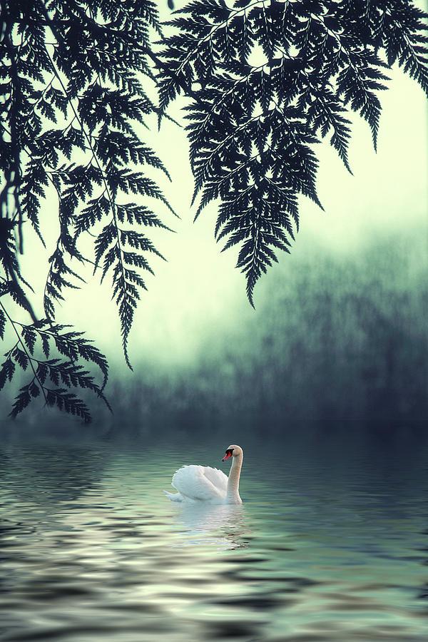 Tropical Photograph - Tropical Splendor by Jessica Jenney
