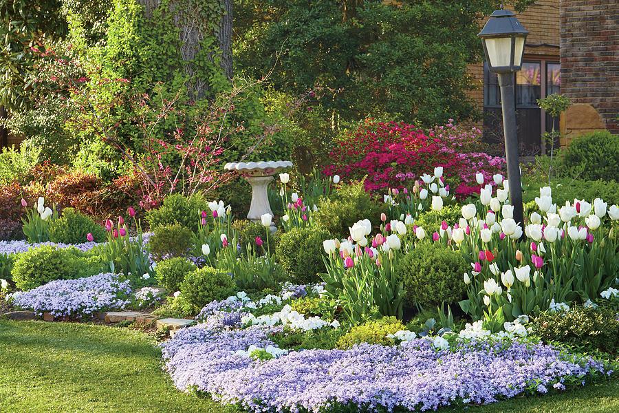 Tulip bed by Garden Gate magazine