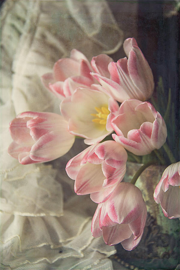 Tulips and Lace by Cindi Ressler