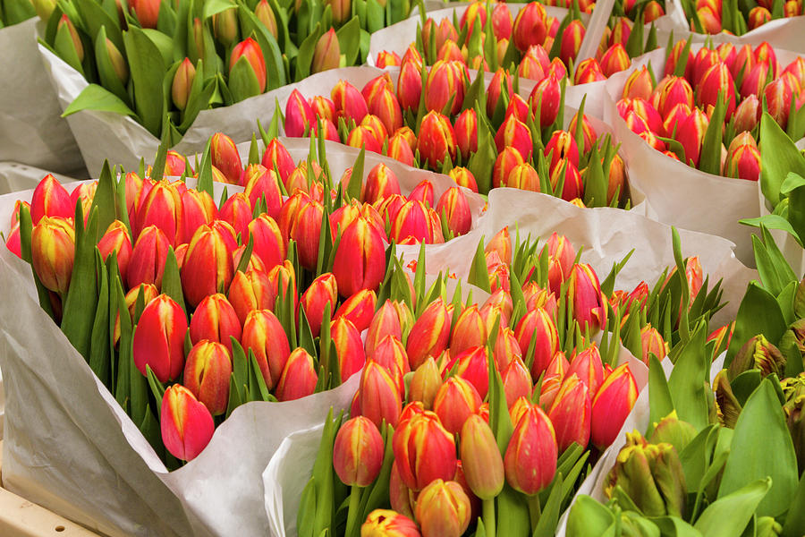 Tulips For Sale At A Flower Market Photograph by P A Thompson