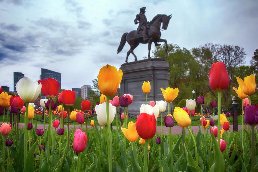 Tulips in the Boston Public Garden by Joann Vitali