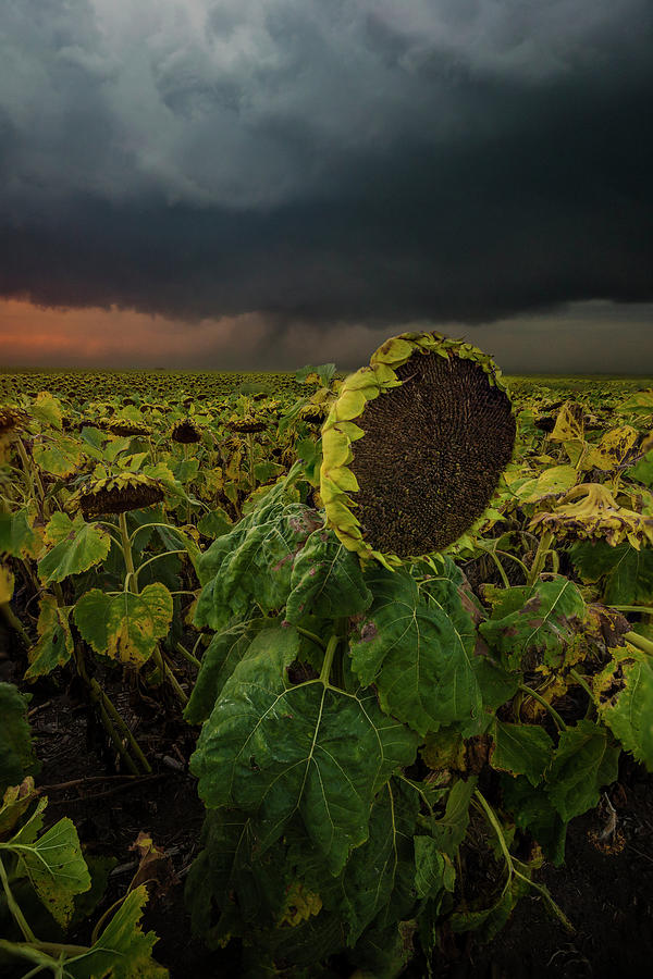 Tornado Photograph - Twisted by Aaron J Groen