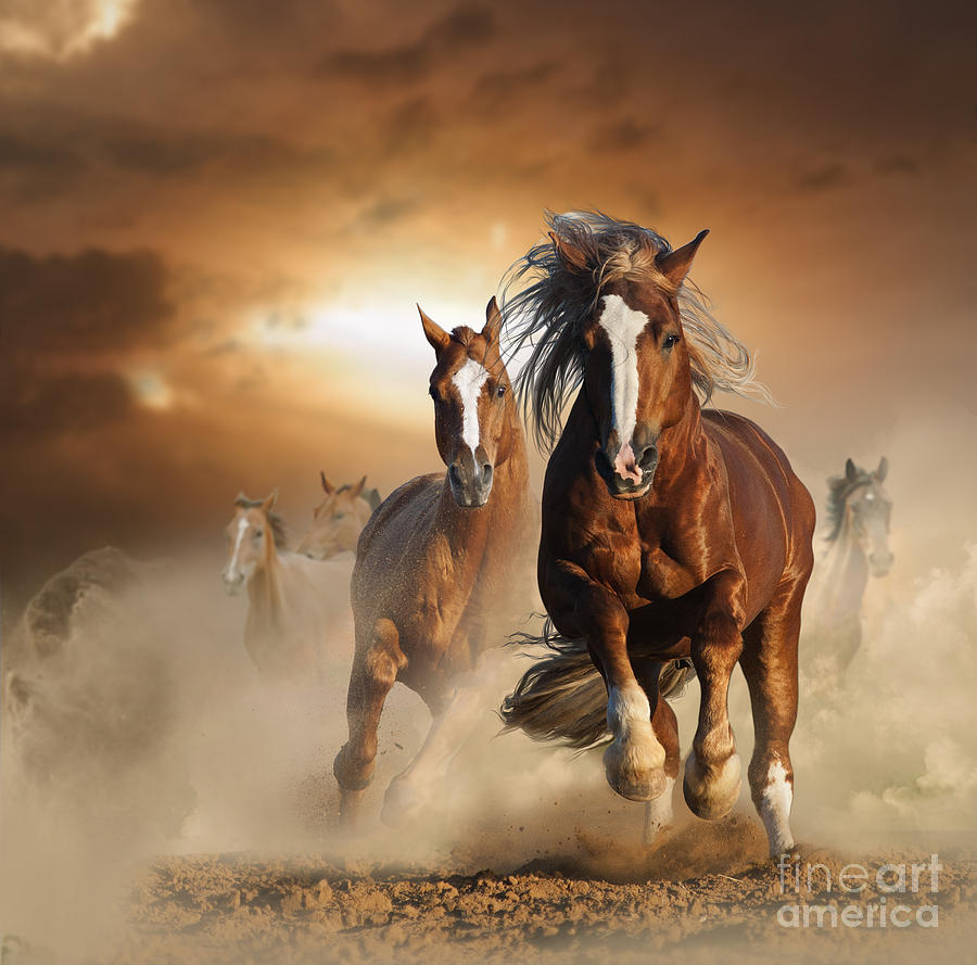Leader Photograph - Two Wild Chestnut Horses Running by Mariait