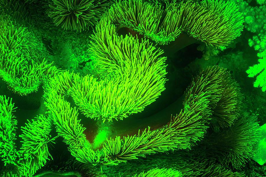 Ambon Island Photograph - Underwater Sea Life Near Airport by Stuart Westmorland