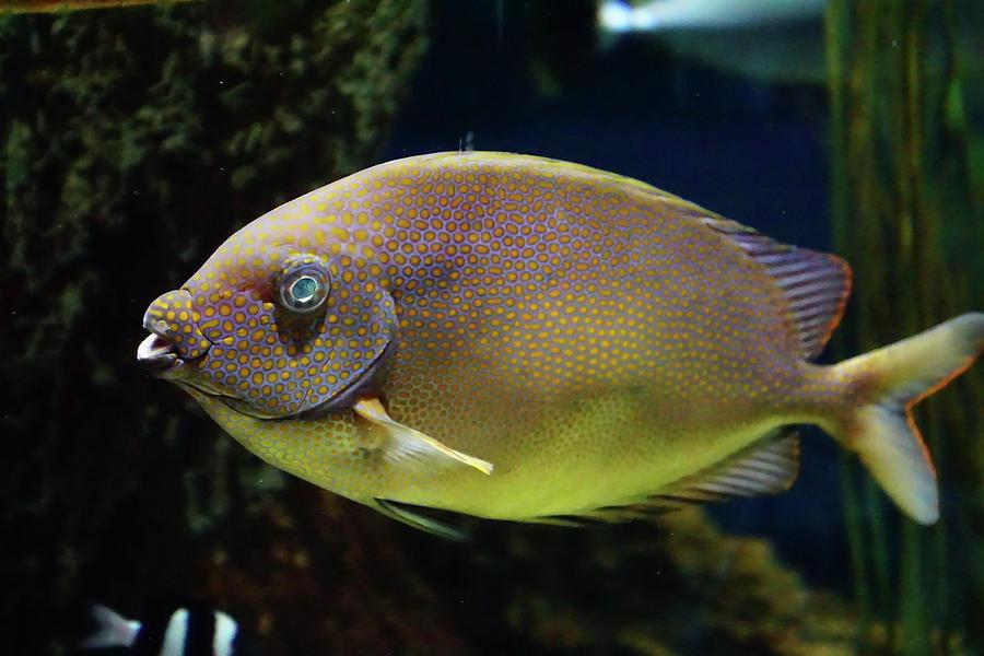 Underwater view of bright colored fish by Steve Estvanik