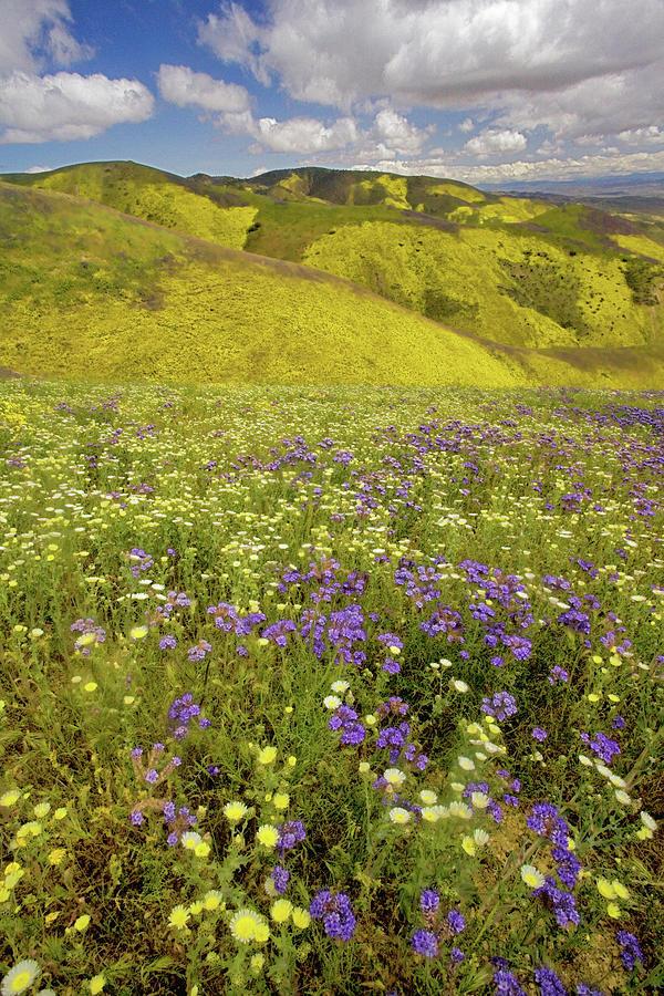 USA, California, Carrizo Plain National Photograph by Charles Gurche