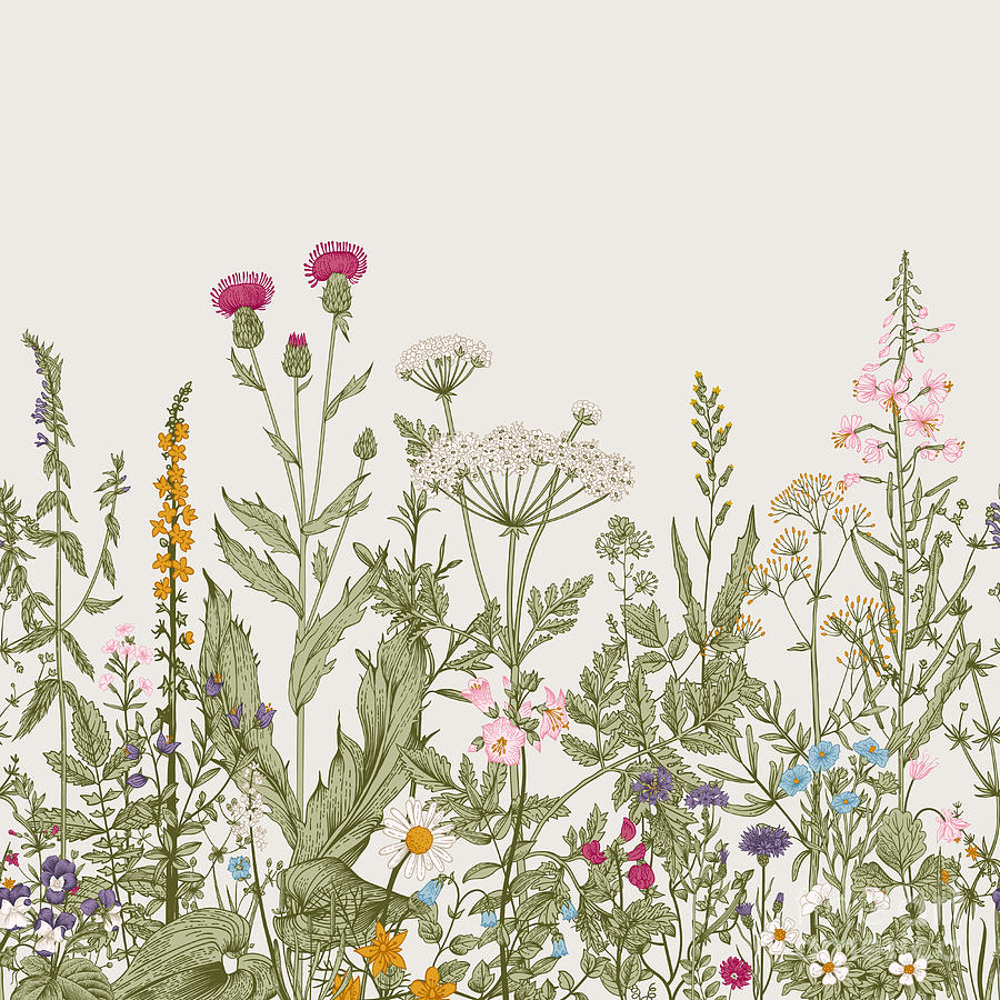 Engraving Digital Art - Vector Seamless Floral Border. Herbs by Olga Korneeva