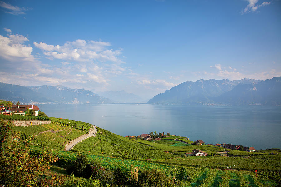 Vineyards Around Lake Leman Photograph by Onfokus