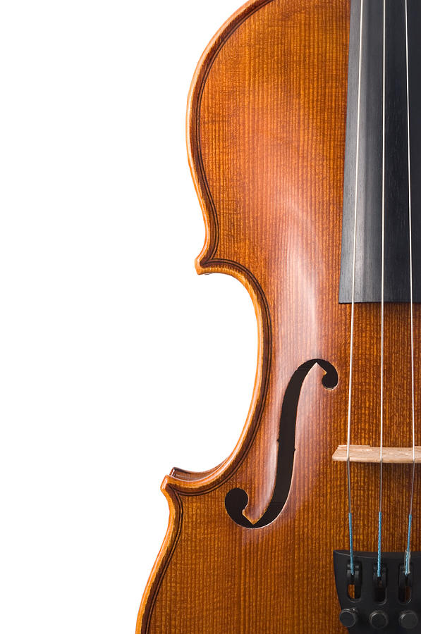 Violin Isolated On White Photograph by Zocha k