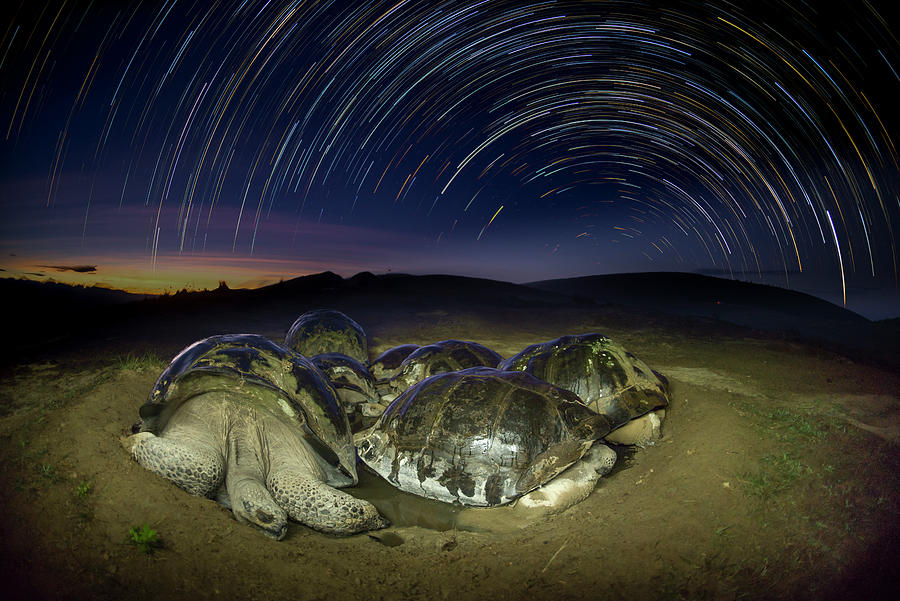 Volcan Alcedo Tortoises And Star Trails Photograph by Tui De Roy