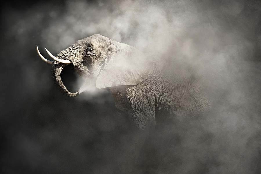 Vulnerable African Elephant In The Dust by Susan Schmitz