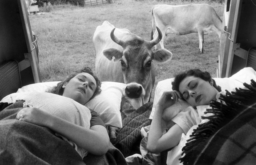 Wake Up Call Photograph by Thurston Hopkins