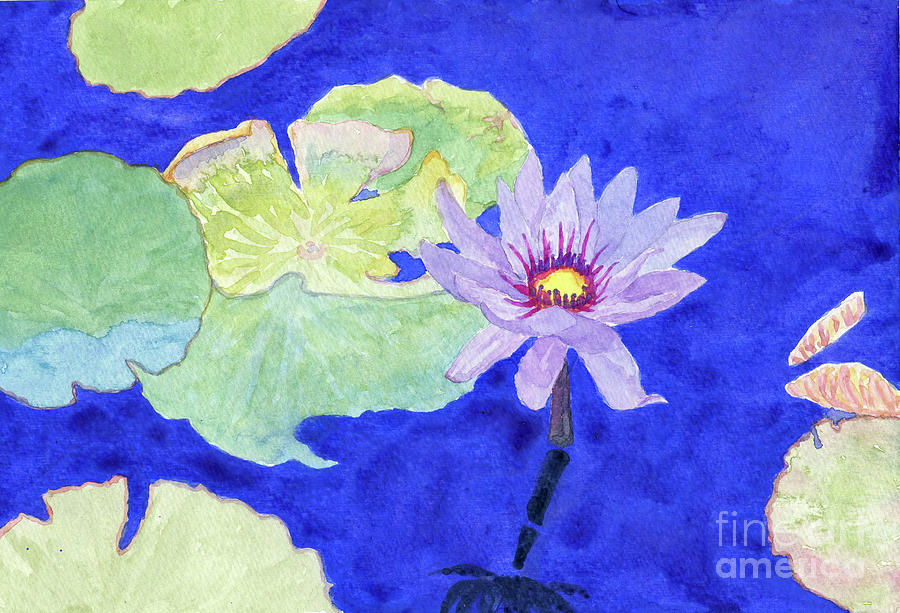 Water Lily by Anne Marie Brown