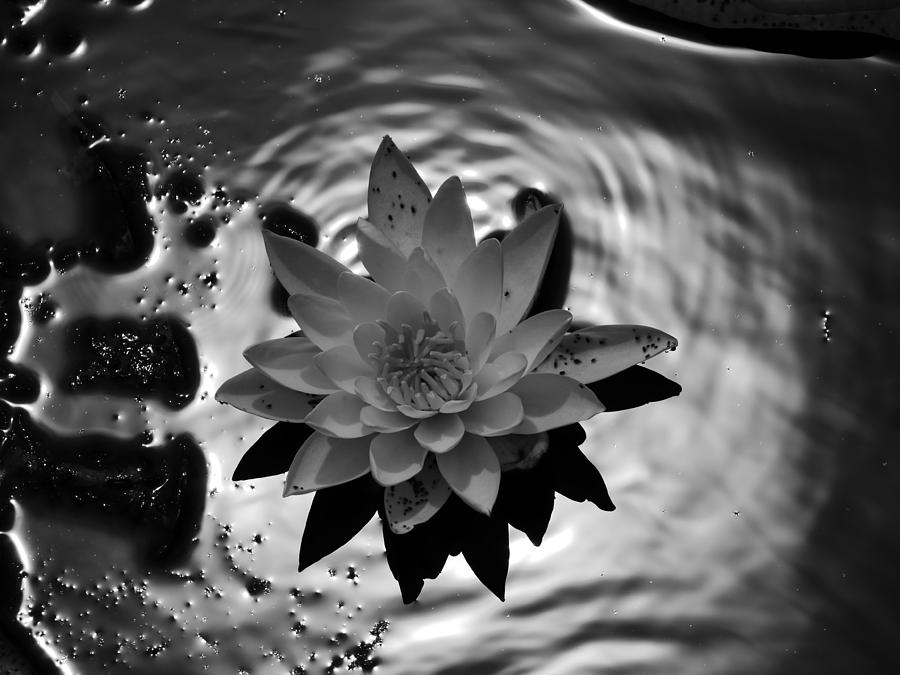 Water lily by Jane Ford