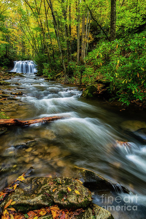 Waterfall Holly River State Park by Thomas R Fletcher