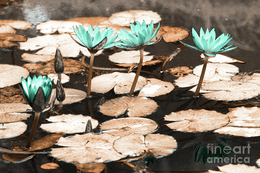 Infrared Photograph - Waterlilies 1 by Gaspar Avila