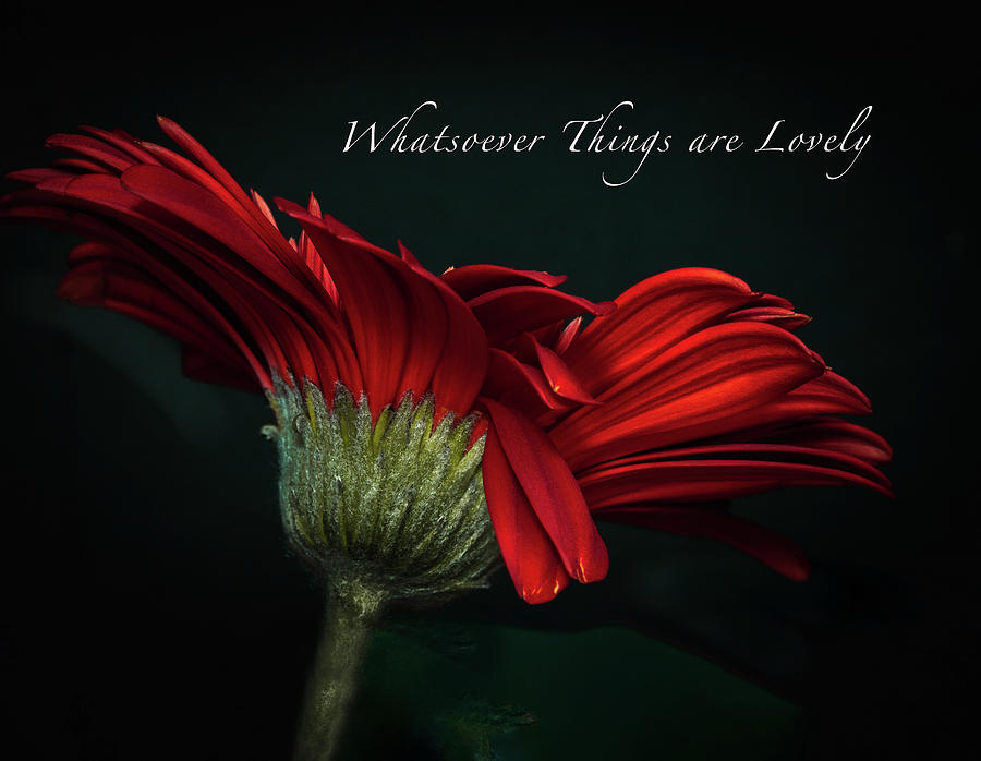 Whatsoever Things are Lovely by Joni Eskridge