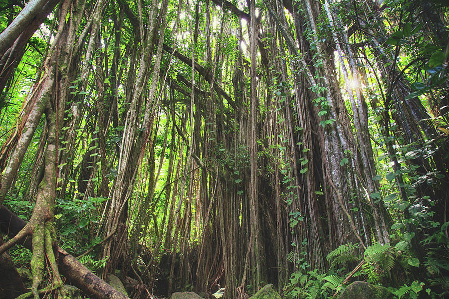 Oahu Photograph - Where Life Takes Us by Laurie Search