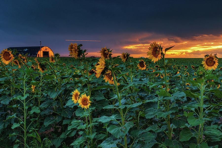 Whispers Of Summer by John De Bord