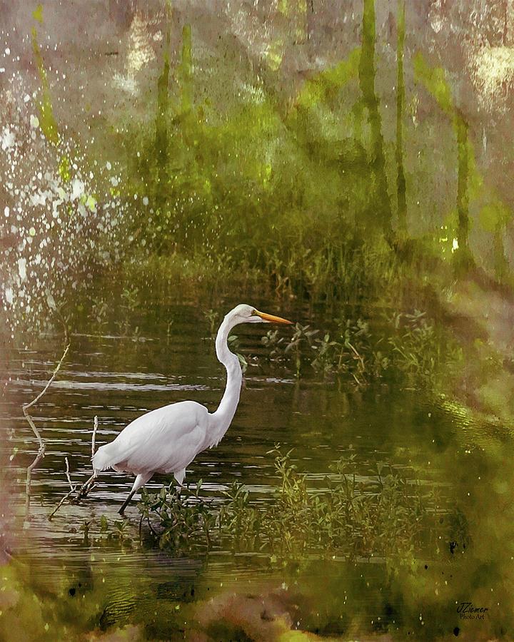 Heron Photograph - White Heron by Jim Ziemer