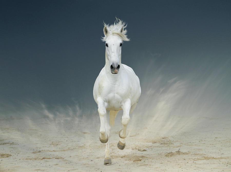 White Horse Galloping Photograph by Christiana Stawski