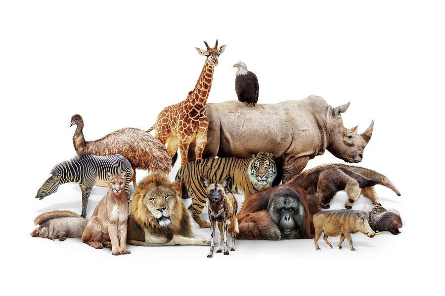 Phoenix Zoo Animals by Susan Schmitz