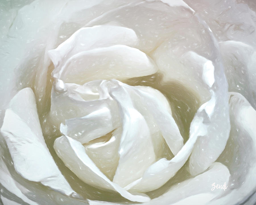 White Rose  by Cindy Greenstein
