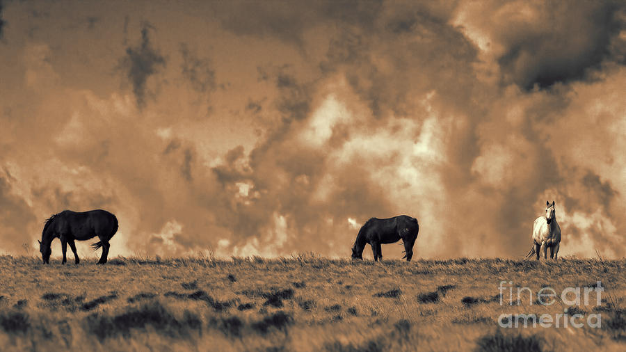 Wild and Free by Jim Garrison