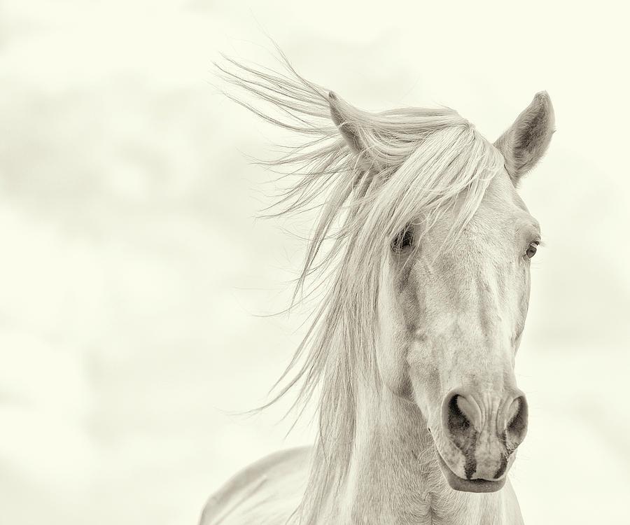 Western Photograph - Wind Blown Mane I by Phburchett